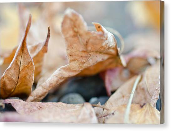 Canvas Print featuring the photograph Autumn Leaf Abstract by Margaret Pitcher