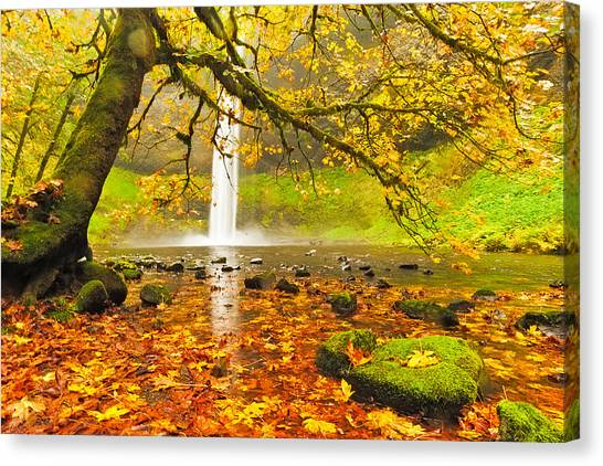 Silver Leaf Canvas Print - Autumn Leaves At South Silver Falls by Alvin Kroon