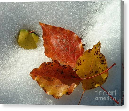 Autumn Leaves In Snow Canvas Print