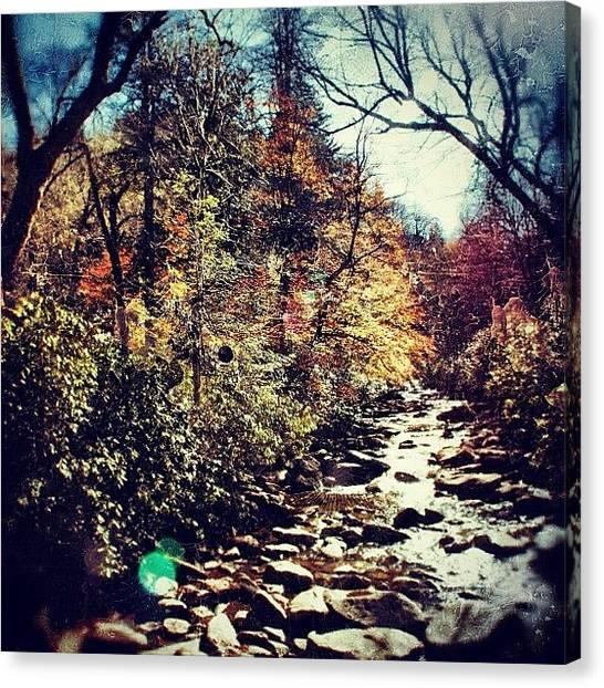 Autumn Leaves Canvas Print - Autumn Leaves by Joel Lopez