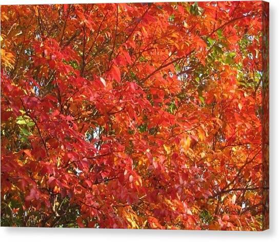 Autumn Leaves Canvas Print by Shawn Hughes
