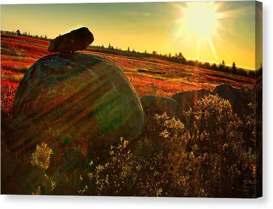Blueberries Canvas Print - Autumn Morn In The Berry Field by Susan Capuano