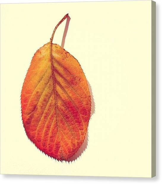 Orange Canvas Print - Autumn by Nic Squirrell
