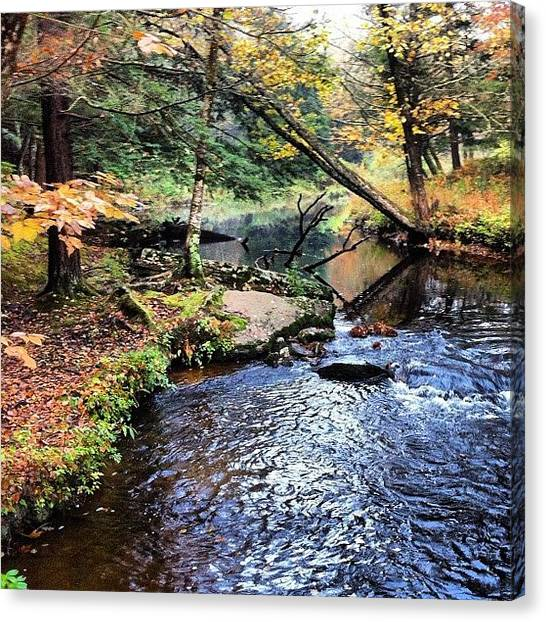 Trout Canvas Print - Autumn On Mastope Creek by Dave M
