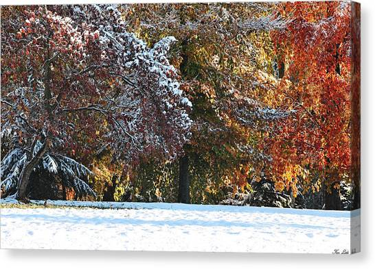Autumn Snowstorm Canvas Print by Kimberly Little