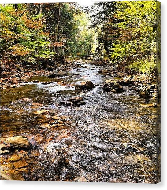 Trout Canvas Print - Autumn Stream by Dave M