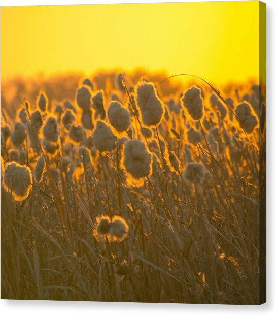 Prairie Sunrises Canvas Print - #autumn #sunrise On The #prairies by Michael Squier