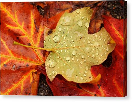 Autumn Treasures Canvas Print by Matthew Green