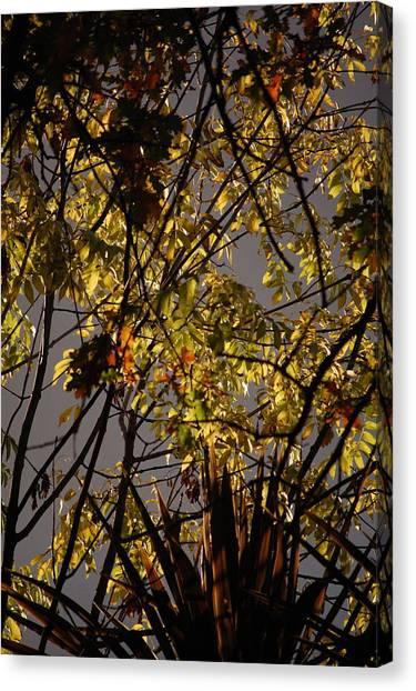 Autumn Trees IIi Canvas Print by Dickon Thompson