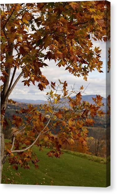 Autumn Trees Canvas Print by Margaret Steinmeyer