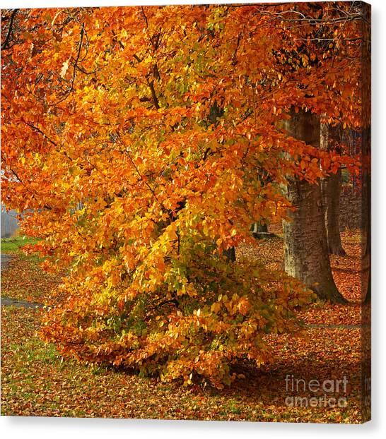 Colorplay Canvas Print - Autumn Wonder by Lutz Baar