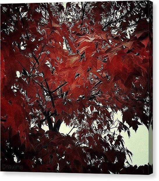 Autumn Leaves Canvas Print - Autumnal Leaves by Natasha Marco