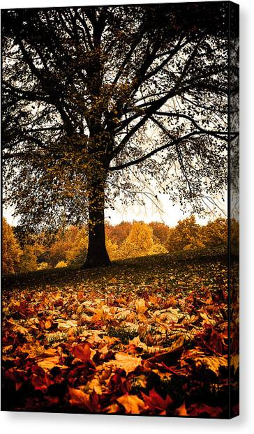 Autumnal Park Canvas Print