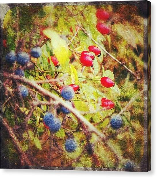 Wild Berries Canvas Print - autumns Bounty by Alexandra Cook
