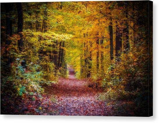 Autumns Canopy Canvas Print