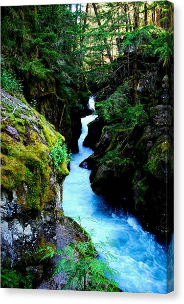 Mossy Forest Canvas Print - Avalanche Gorge by Robert Gallup