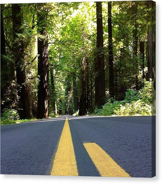 Redwood Forest Canvas Print - Avenue Of The Giants,redwoods #redwoods by Paul Wallingford
