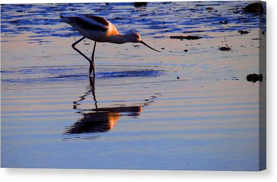 Avocet In The Dim Light Canvas Print by Catherine Natalia  Roche