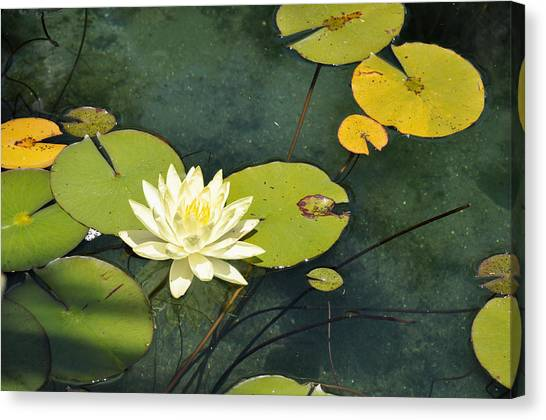 Awaiting Monet Canvas Print
