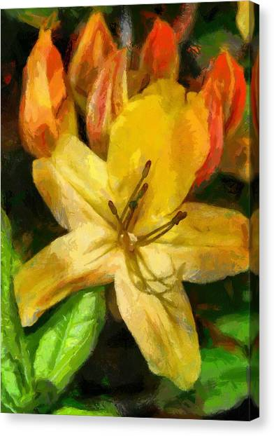 Azalea In Bloom Canvas Print