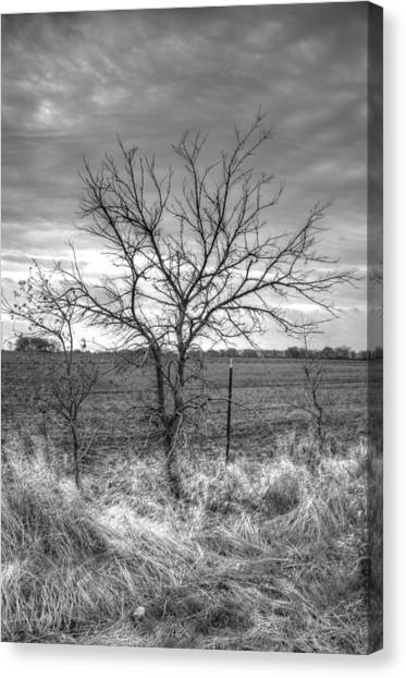 B/w Tree In The Country Canvas Print