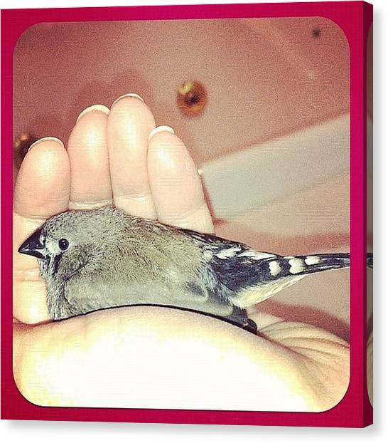 Finches Canvas Print - #baby #bird #finch My #hand #love by Lori Lynn Gager