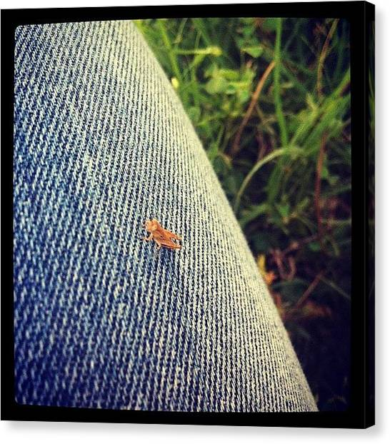Legs Canvas Print - Baby Grasshopper by Angie Davis