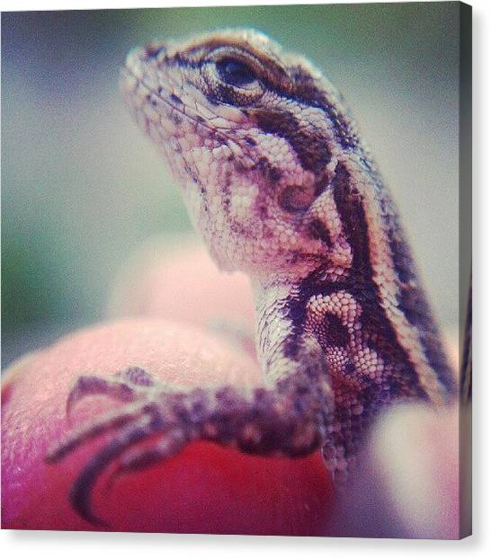 Lizards Canvas Print - Baby Lizard #lizard #reptiles by Jen Flint