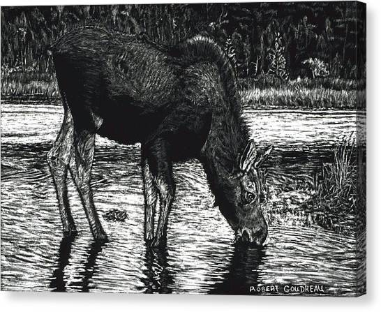 Baby Moose Grazing Canvas Print by Robert Goudreau