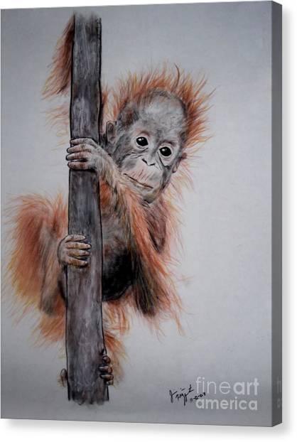 Baby Orangutan  Canvas Print