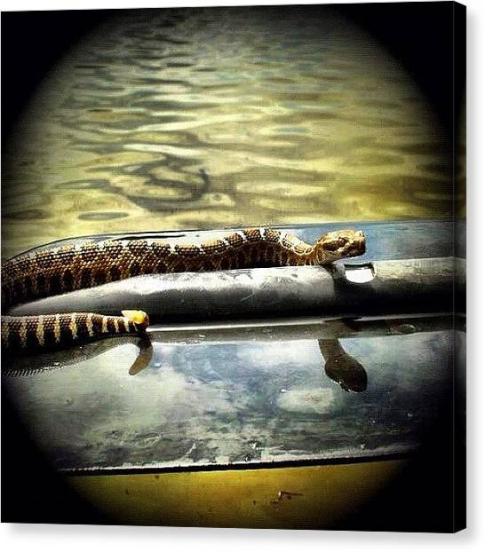 Rattlesnakes Canvas Print - #baby #rattlesnake I Found Swimming In by Super Mario