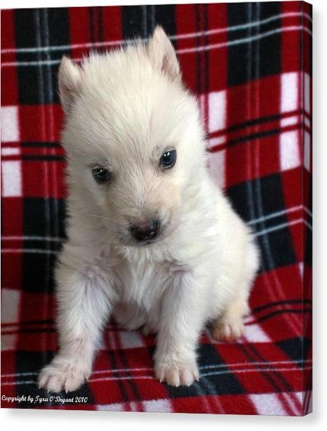 Baby Wolfdog Canvas Print