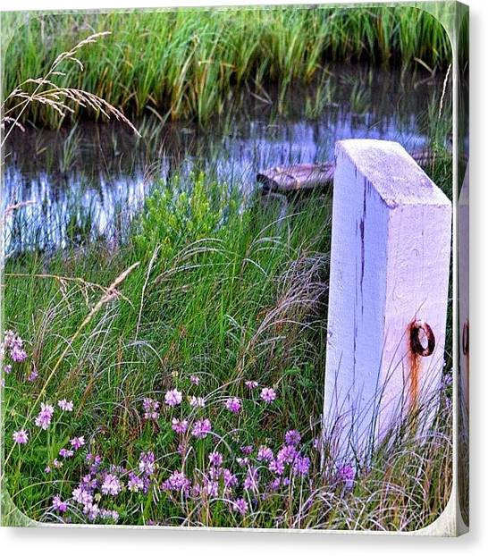 Marshes Canvas Print - Back Bay Loveliness by Penni D'Aulerio