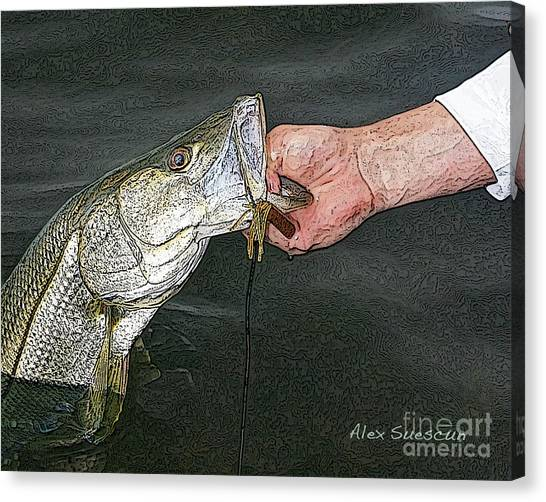 Back Bay Snook Canvas Print
