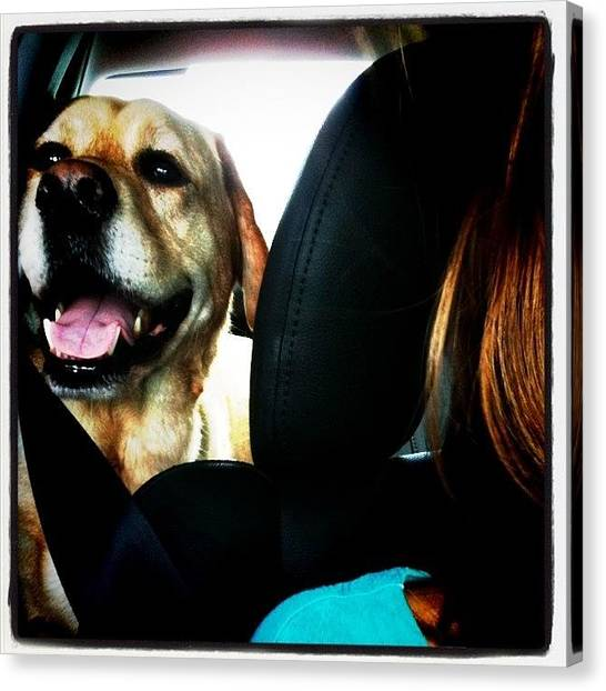 Yellow Lab Canvas Print - Back Seat And Two Doors by Ashton L