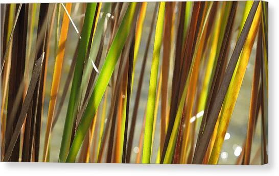 Backlit Grass Wc 2  Canvas Print by Lyle Crump