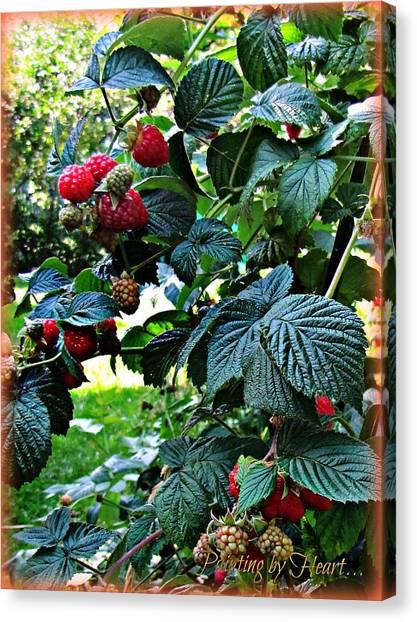 Backyard Berries Canvas Print