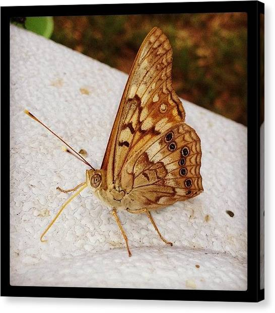 Large Birds Canvas Print - Backyard Butterfly by Marc Crow