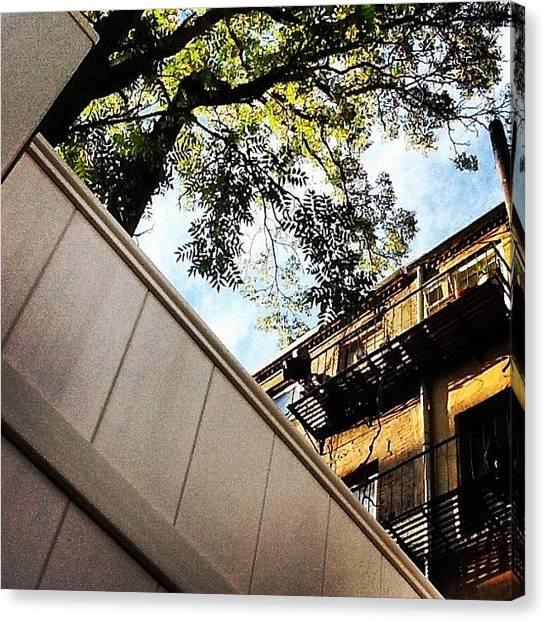Harlem Canvas Print - #backyard #chillin #lookup #tree by Explore More