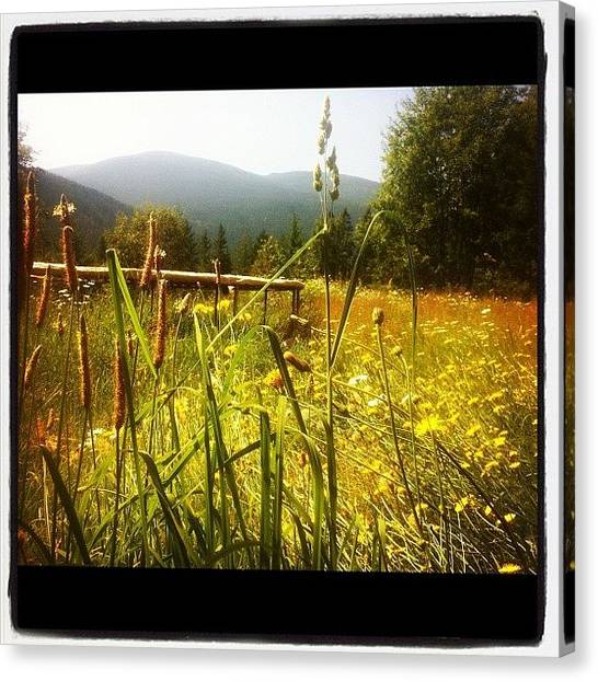 Trampoline Canvas Print - Backyard #grass #pretty #flowers by Acacia Taylor