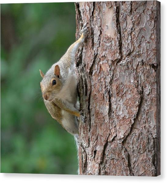 Backyard Squirrel Canvas Print