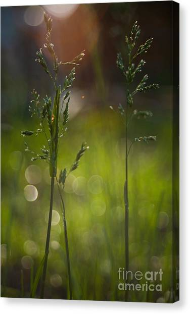 Backyard Canvas Print by Sue OConnor