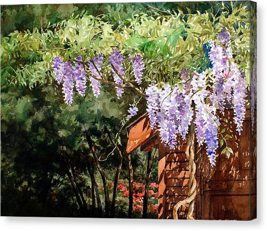 Backyard Wisteria Canvas Print by Peter Sit