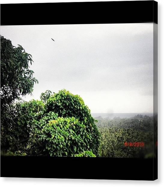 Falcons Canvas Print - #bahrain #tree #goa #india #falcon#green by Ahmed Ali