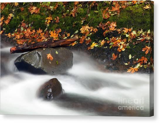 Maple Season Canvas Print - Balance Of The Seasons by Mike  Dawson