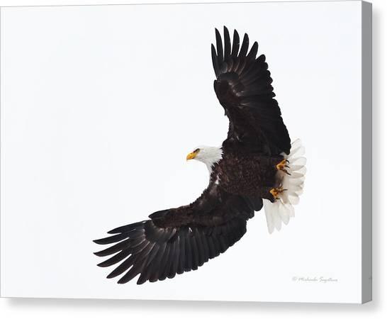 Bif Canvas Print - Bald Eagle In Flight by Michaela Sagatova
