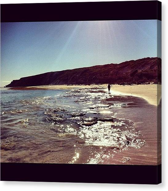 Kangaroo Canvas Print - Bales Beach 2 by Andrew Coulson