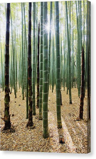 Bamboo Forest Canvas Print by Jeremy Woodhouse