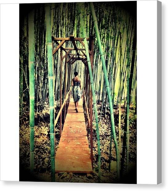 Bamboo Canvas Print - Bamboo Forest by Kirshan Murphy
