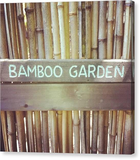 Panda Canvas Print - Bamboo Garden  by Nikita Shah